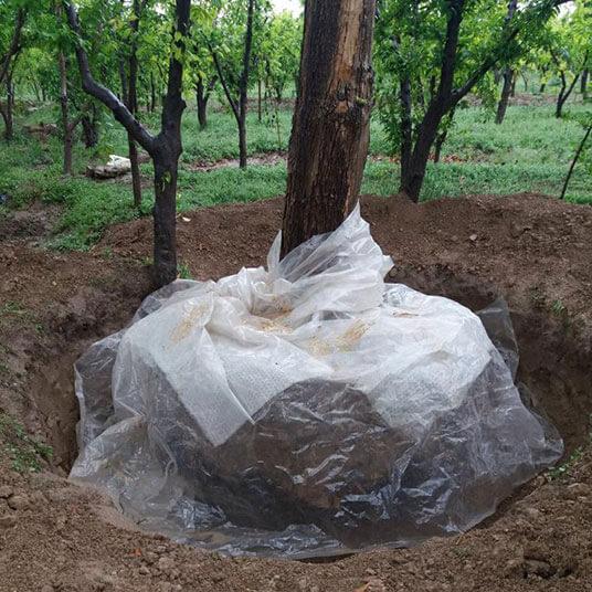 جابجایی درخت